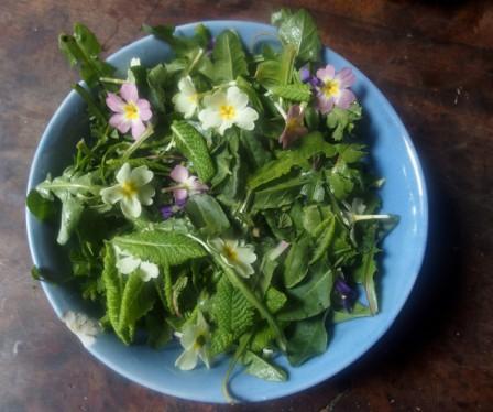 .Salade_m.jpg